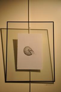 Nautilus | Laura Auxier | graphite