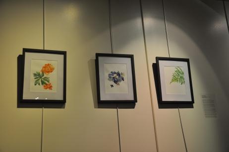 Globe Flowers (Trollius X Cultorum), Fern (Polystitchum Setiferum), Hydrangeas (Hydrangea Macrophylla) | Bre McDaniel | watercolour on paper
